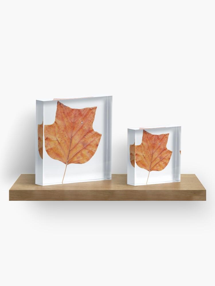 Alternative Ansicht von 1 Blatt im Herbst Acrylblock