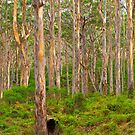 The Perfect Forest by aabzimaging