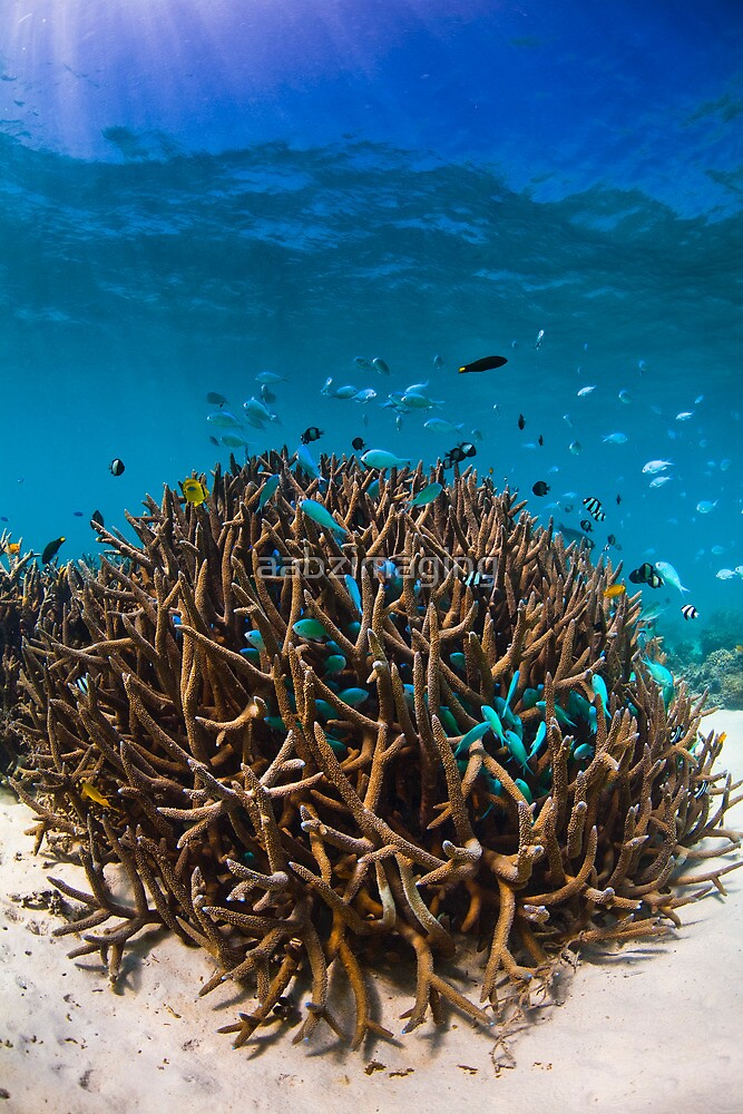 Busy Reef by aabzimaging