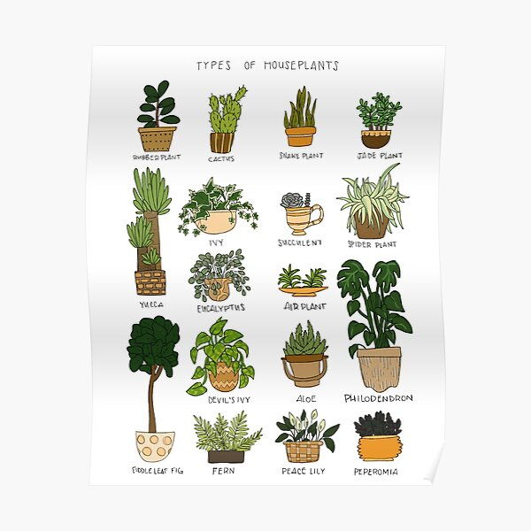 Types of Houseplants Poster