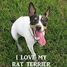 rat terrier love with picture by marasdaughter