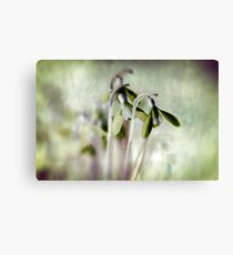 Subtle Snowdrop Canvas Print