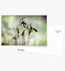 Subtle Snowdrop Postcards