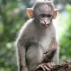 Baby Monkey by ApeArt