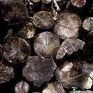 Logs by Mike Topley