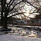Bradgate Park Snow III by Mike Topley