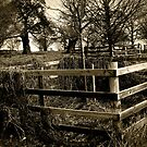 Bradgate Park II by Mike Topley