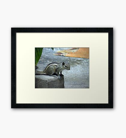 Curiosity - Indian Squirrel Framed Print
