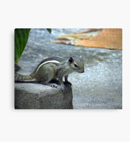 Curiosity - Indian Squirrel Canvas Print