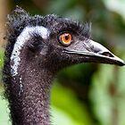 Wie geht es dir, Emu! von Marylou Badeaux