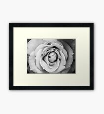 Emotion: Black and White Photo of a Rose in Bloom Framed Print