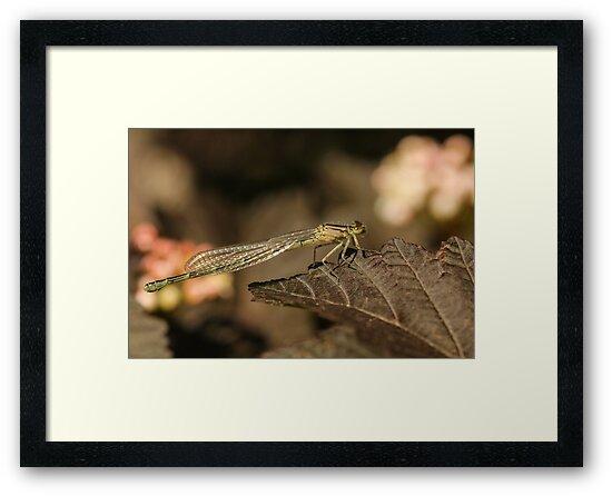 Dragonfly on a Leaf by Gary Horner