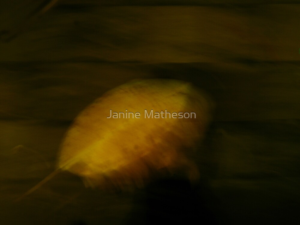 float by Janine Matheson