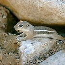 Chipmunk in Arizona by Bonnie Pelton