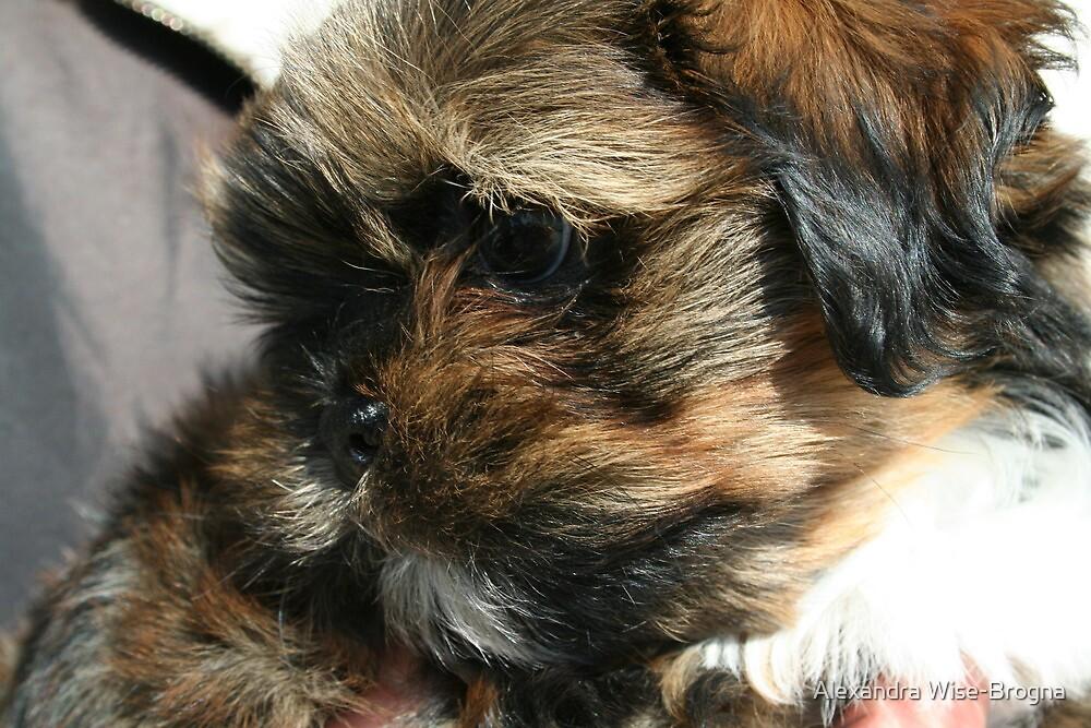 Me!  Baby Chewbacca  by Alexandra Wise-Brogna