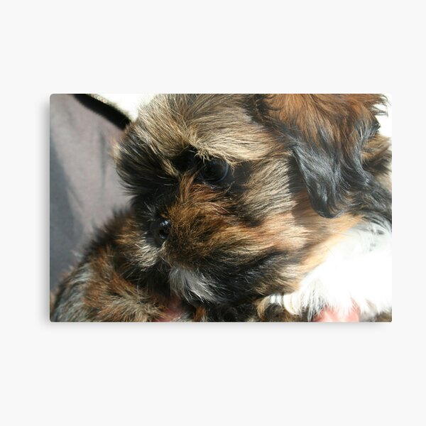 Me!  Baby Chewbacca  Metal Print