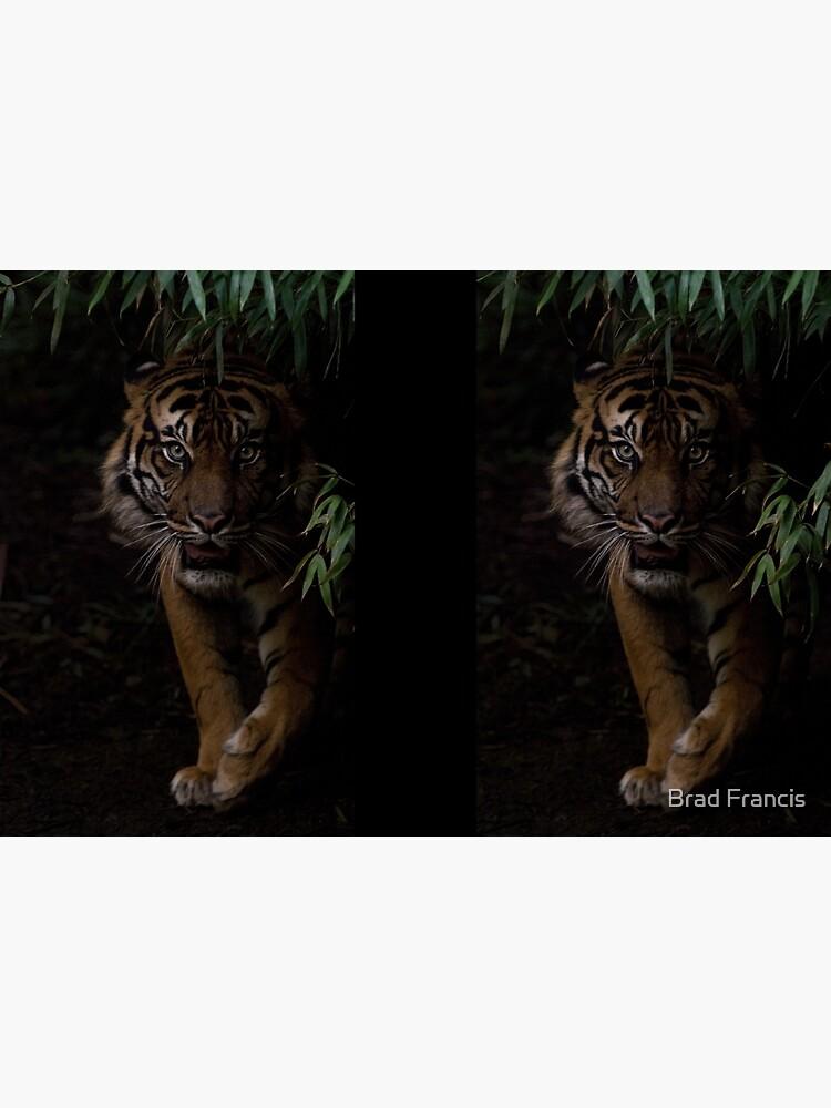 Sumatran Tiger by bfra