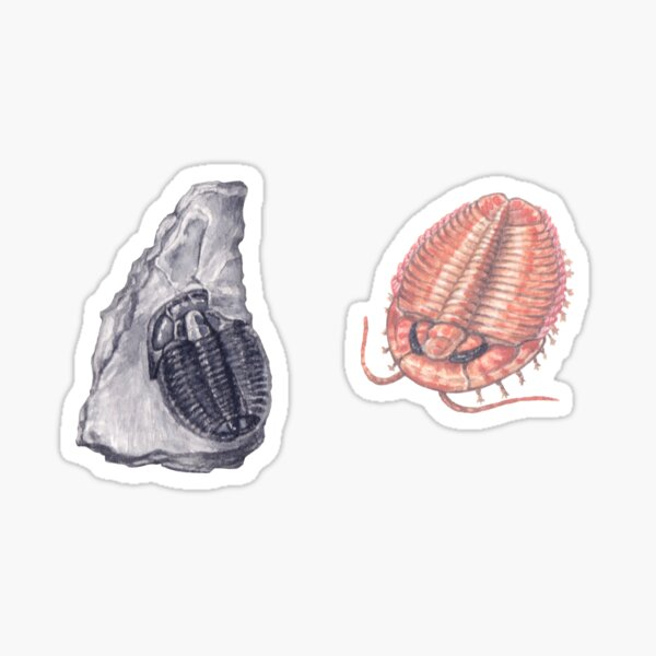 Trilobite and fossil Sticker