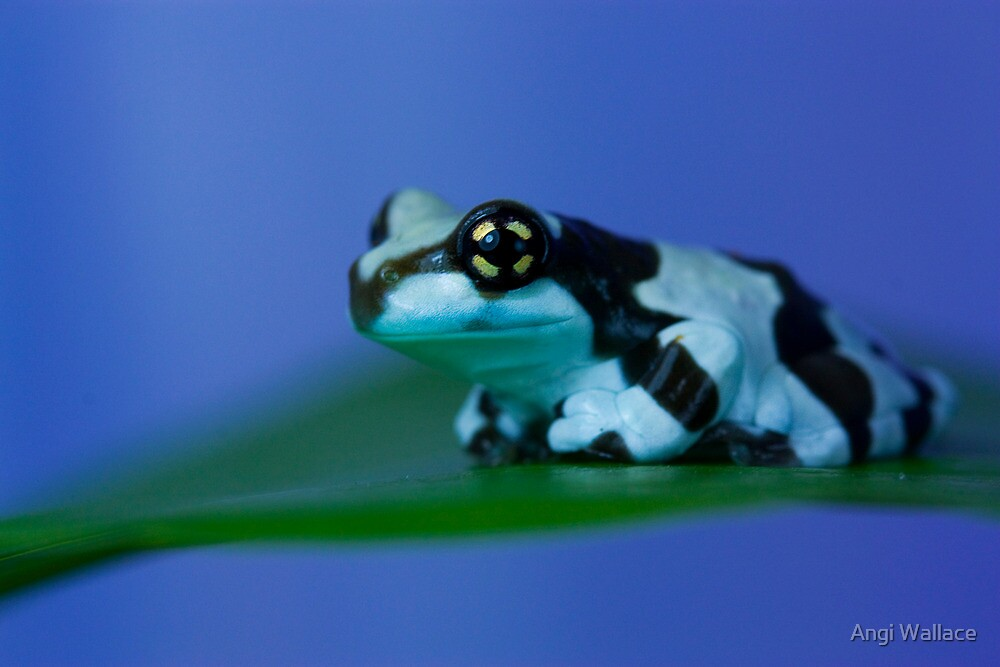 Floating frog by Angi Wallace
