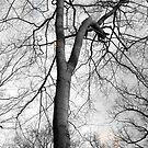 Slingshot by deepstarr7020