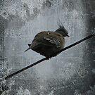 Grungy Bird by PhoenixArt