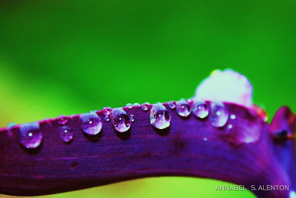 purple rain by ANNABEL   S. ALENTON
