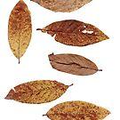 6 Blätter Herbst-Laub von Gourmetkater