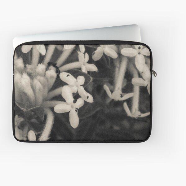 Blooming Riceflowers   Laptop Sleeve