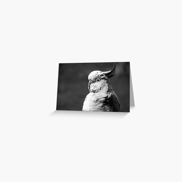 Cockatoo in Black and White Greeting Card