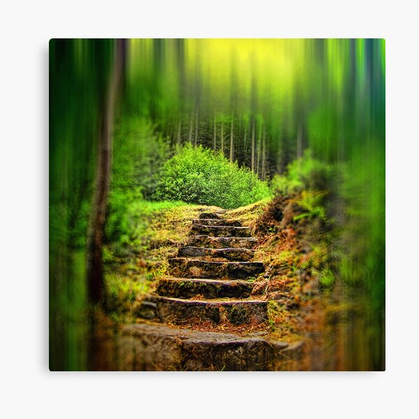 A Path to the Forest Canvas Print