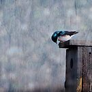 The Adventures of Barney the Barn Swallow by Robin Webster