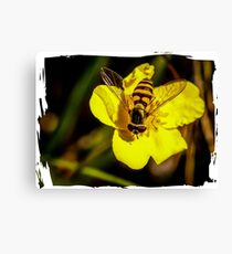 Hover fly on yellow flower Canvas Print