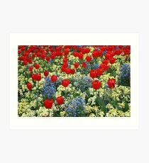 Tulip Mania! Art Print