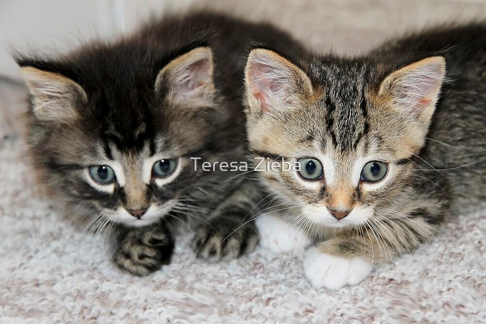 Two Orphan Kittens by Teresa Zieba