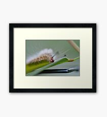 The Furry Little Friend Framed Print