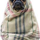 Pug In A Blanket by rewstudio