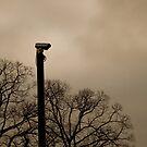 Solo Camera by Darren Glendinning