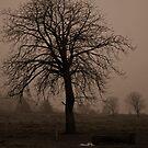 Foggy Tree by Darren Glendinning