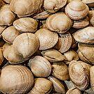 Shellfishs Photo Print Pattern by DFLC Prints