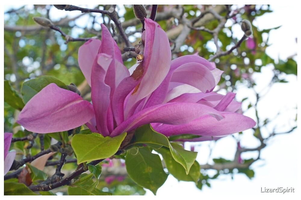 Large Purple Flower by LizardSpirit