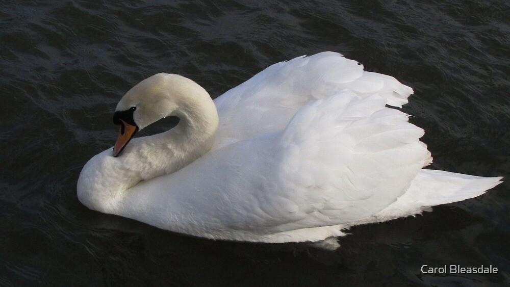 Swan by Carol Bleasdale