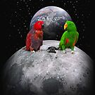 Parrots From Outer Space by RollingStore .