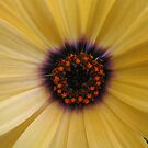 Daisy by Moninne Hardie