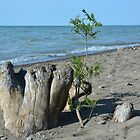Life Renewed on the Shore of Lake Erie. by Billlee