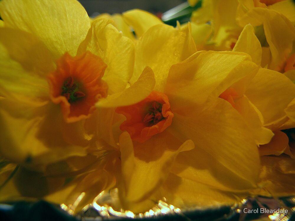 Narcissi by Carol Bleasdale