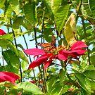 Butterfly Dreams by Sandra Fortier