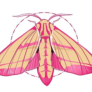 Elephant Hawk Moth by FionaCreates72
