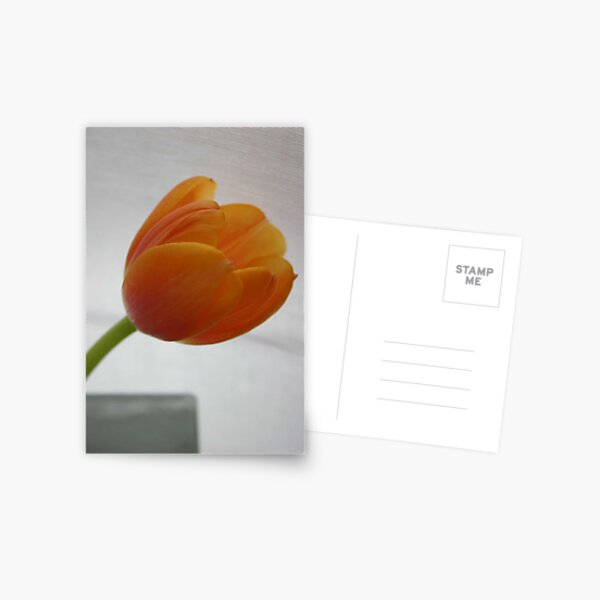 Tulip 1 Postcard