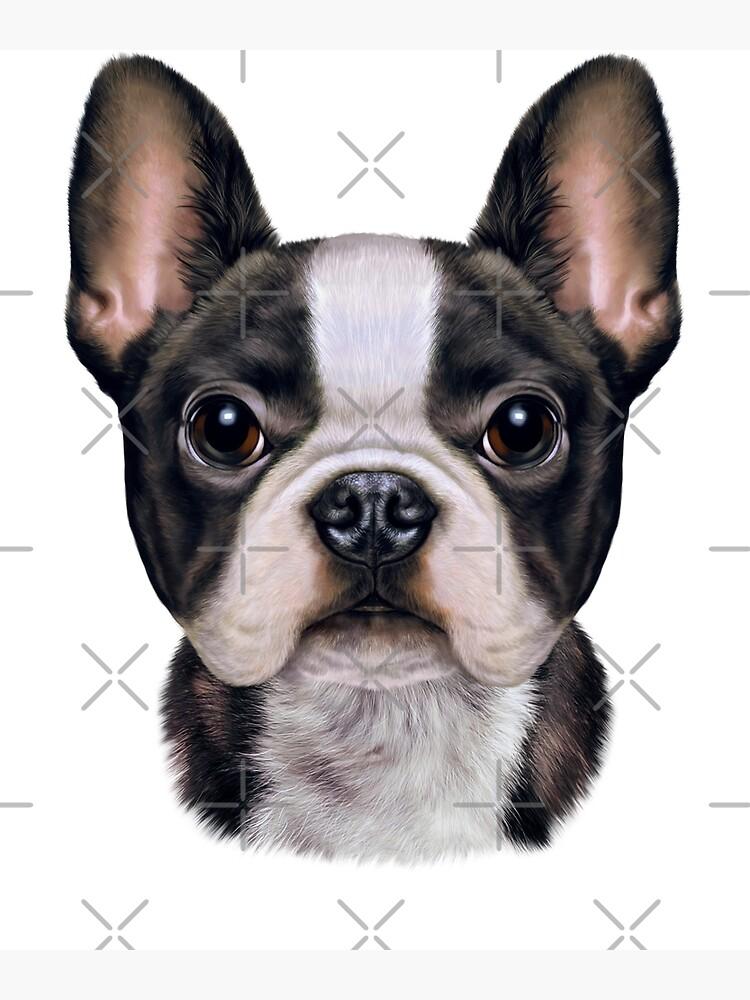 French Bulldog Puppy Face, Cute Dog by Fox-Republic