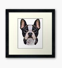 French Bulldog Puppy Face, Cute Dog Framed Print